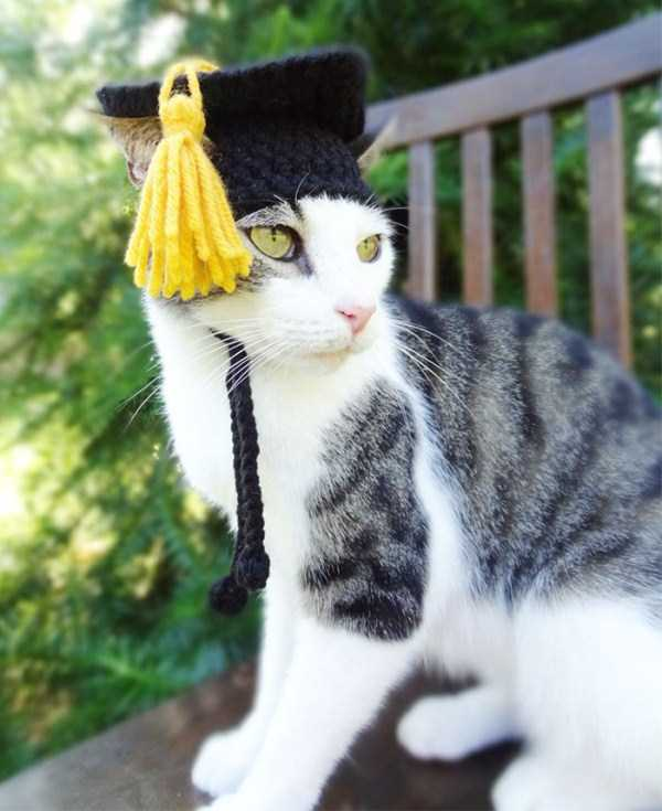 crocheted-pet-hats (7)