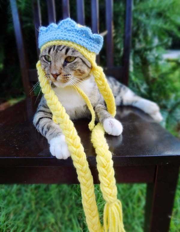 crocheted-pet-hats (9)
