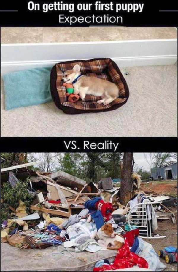 expectations-vs-reality-funny (5)