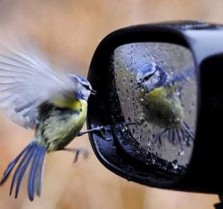 Perfectly Timed Photos (46 photos)
