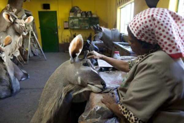 taxidermy-namibia (14)