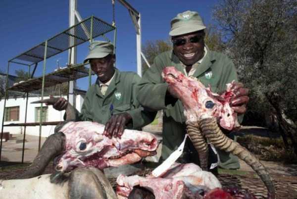 taxidermy-namibia (8)