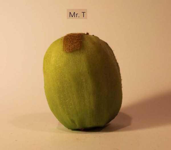 Anthony-Chidiac-carved-kiwi-fruits (24)