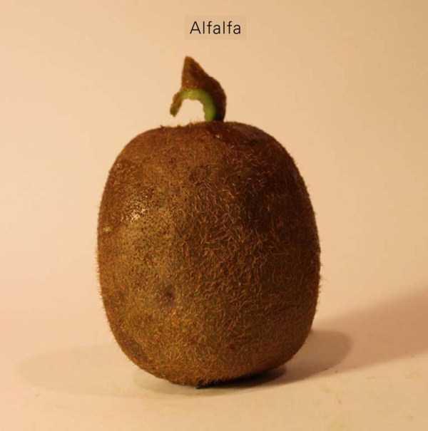 Anthony-Chidiac-carved-kiwi-fruits (25)