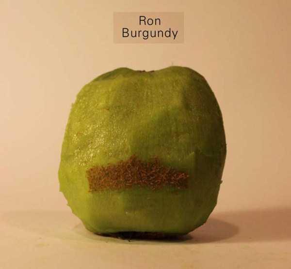 Anthony-Chidiac-carved-kiwi-fruits (29)