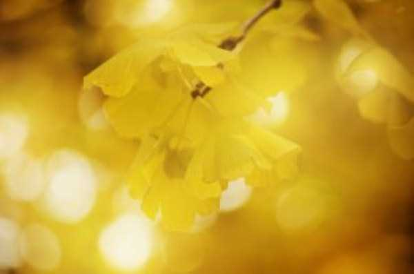 beautiful-fall-photos (1)