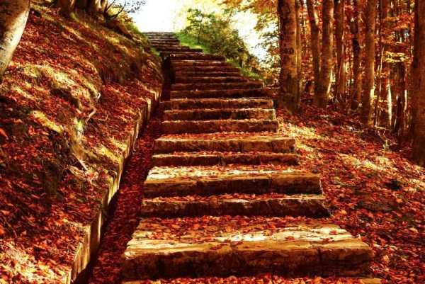 beautiful-fall-photos (11)