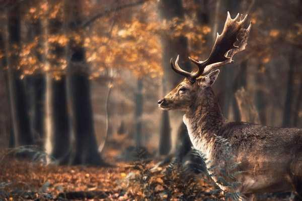 beautiful-fall-photos (17)