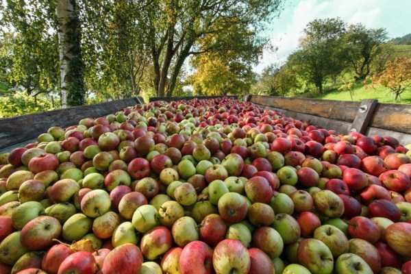 beautiful-fall-photos (19)