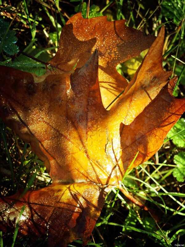 beautiful-fall-photos (25)