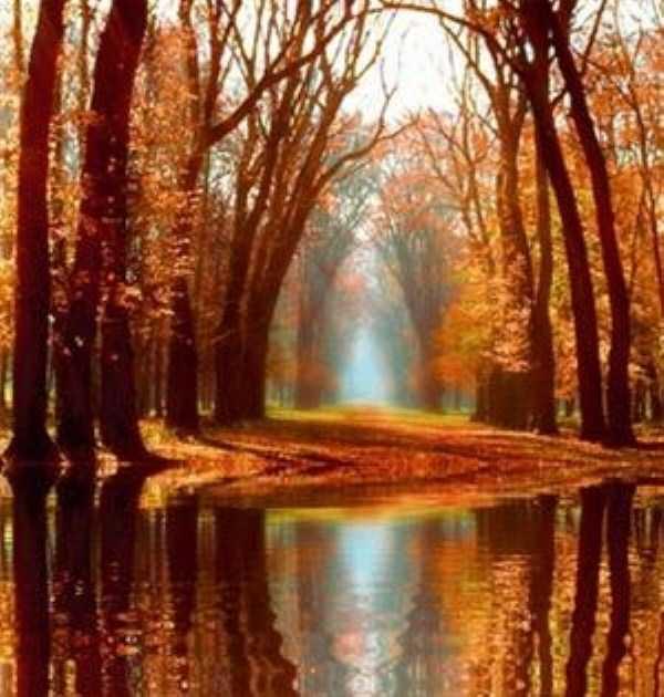 beautiful-fall-photos (27)