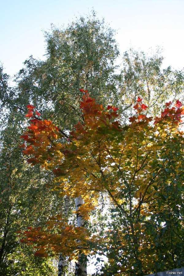 beautiful-fall-photos (28)