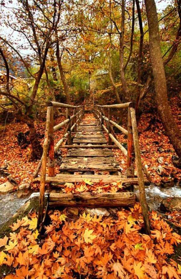beautiful-fall-photos (31)