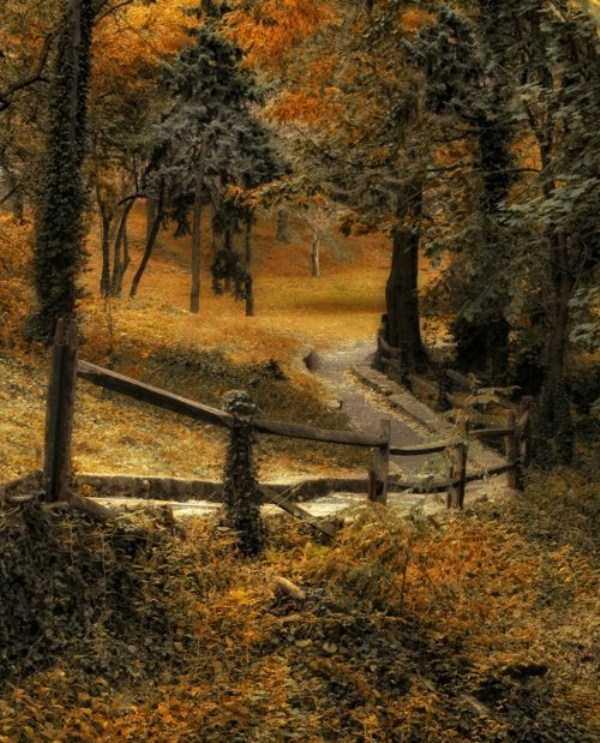 beautiful-fall-photos (32)