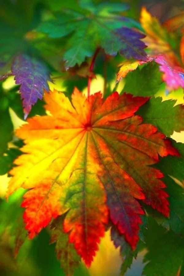 beautiful-fall-photos (33)