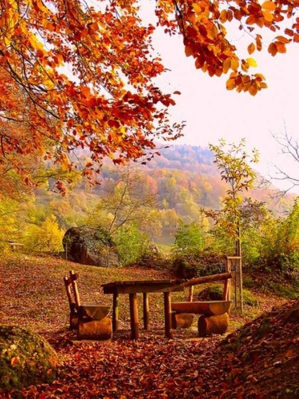 beautiful-fall-photos (35)