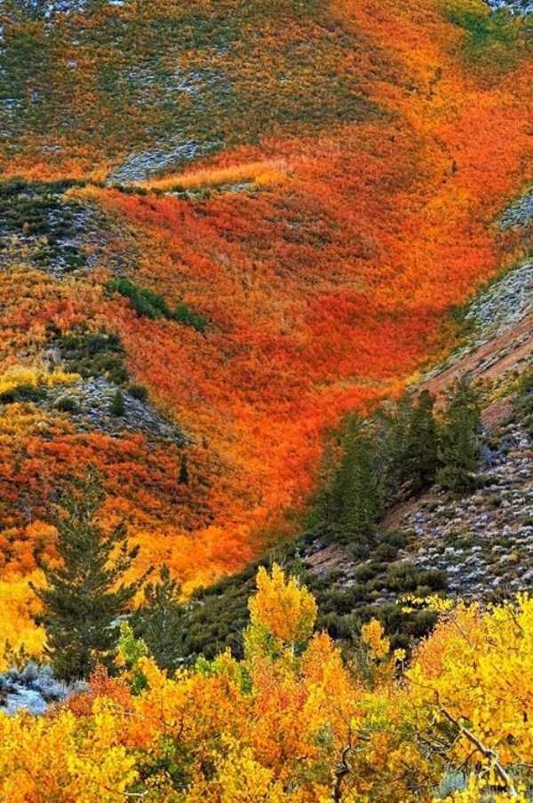 beautiful-fall-photos (37)