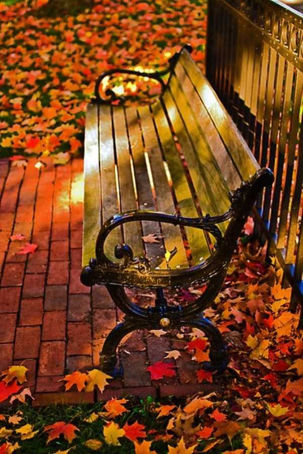 beautiful-fall-photos (39)