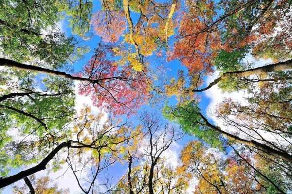 beautiful-fall-photos (4)