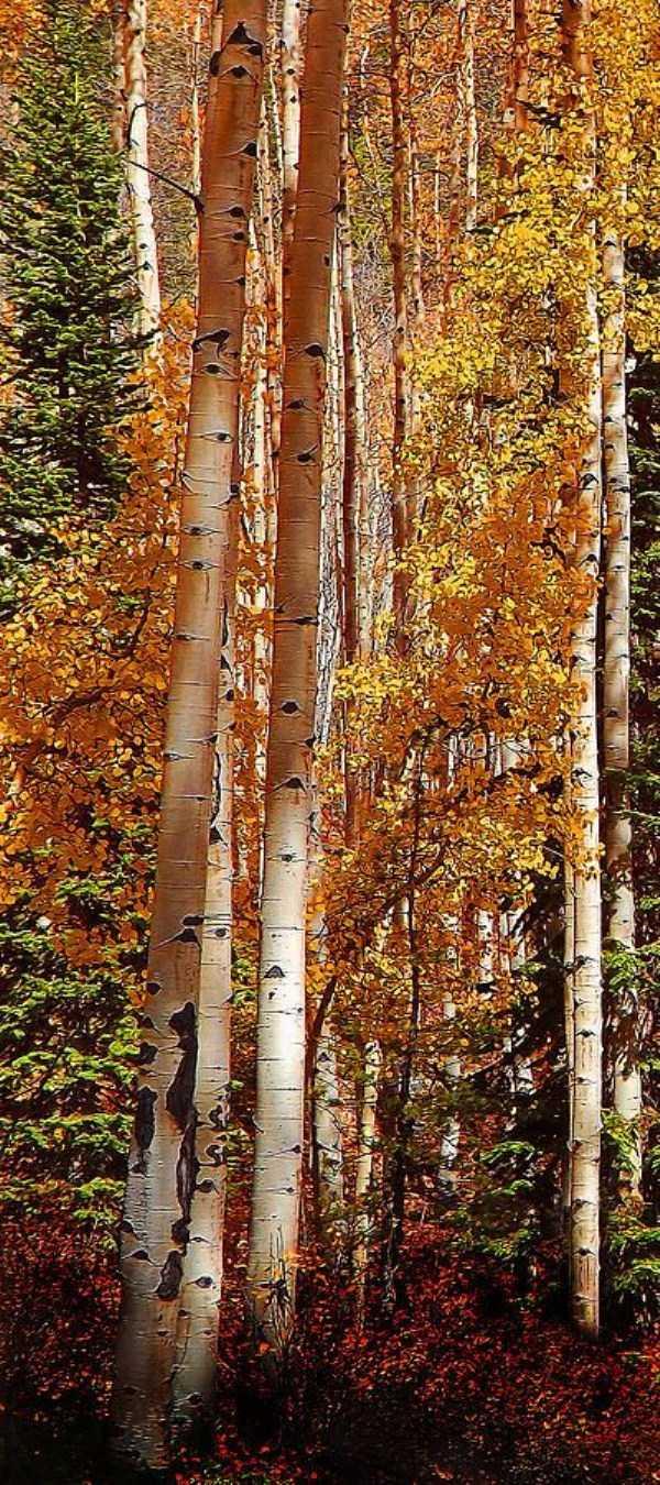 beautiful-fall-photos (40)