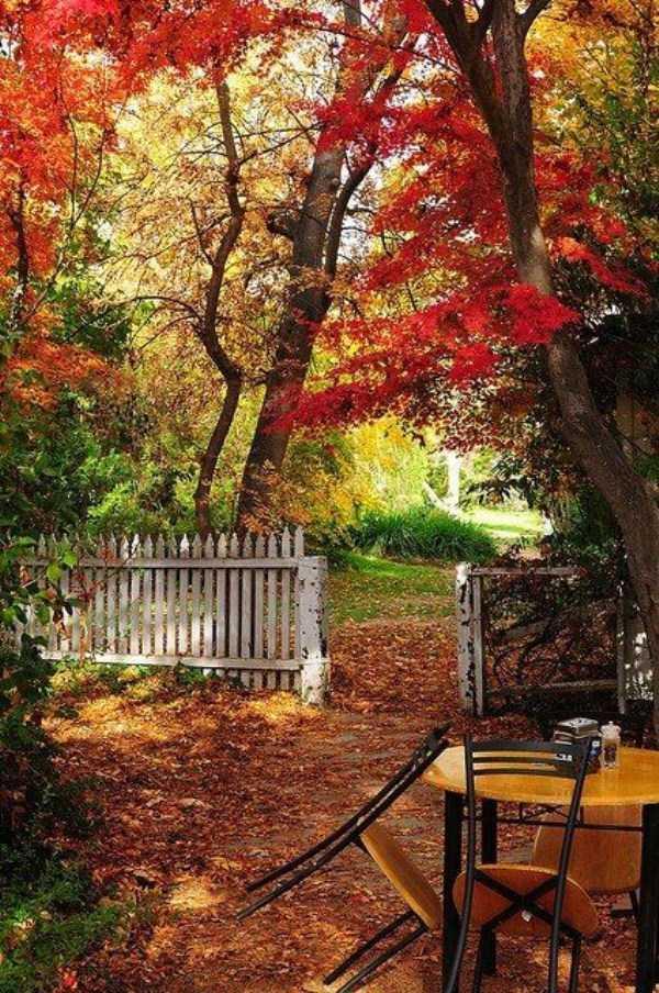 beautiful-fall-photos (5)