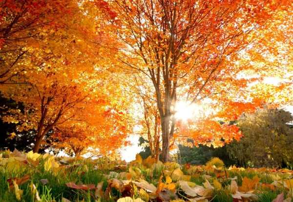 beautiful-fall-photos (8)