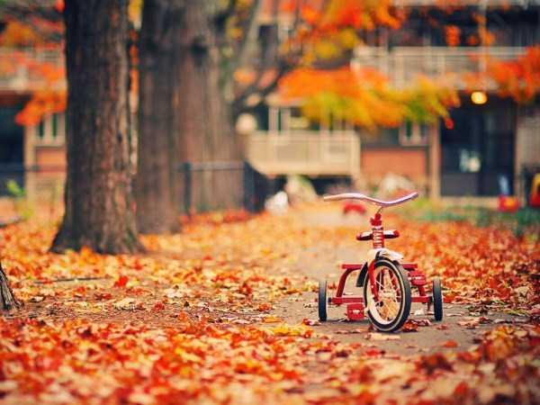 beautiful-fall-photos (9)