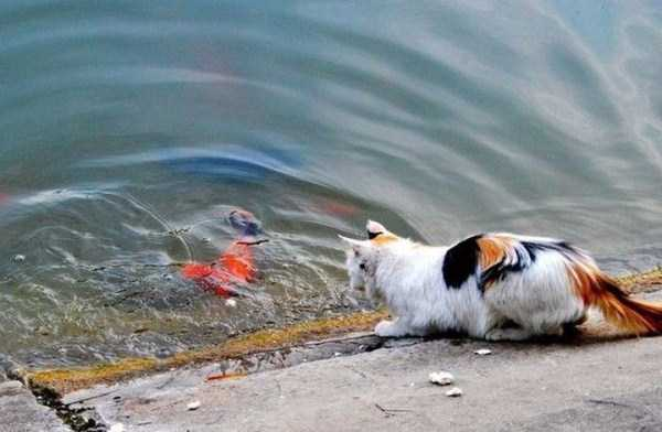 cat-catching-goldfish (1)