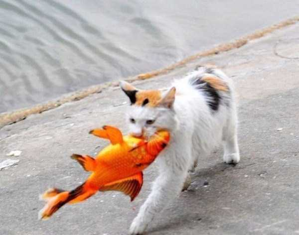 cat-catching-goldfish (8)