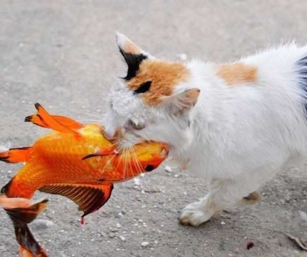 cat-catching-goldfish (9)