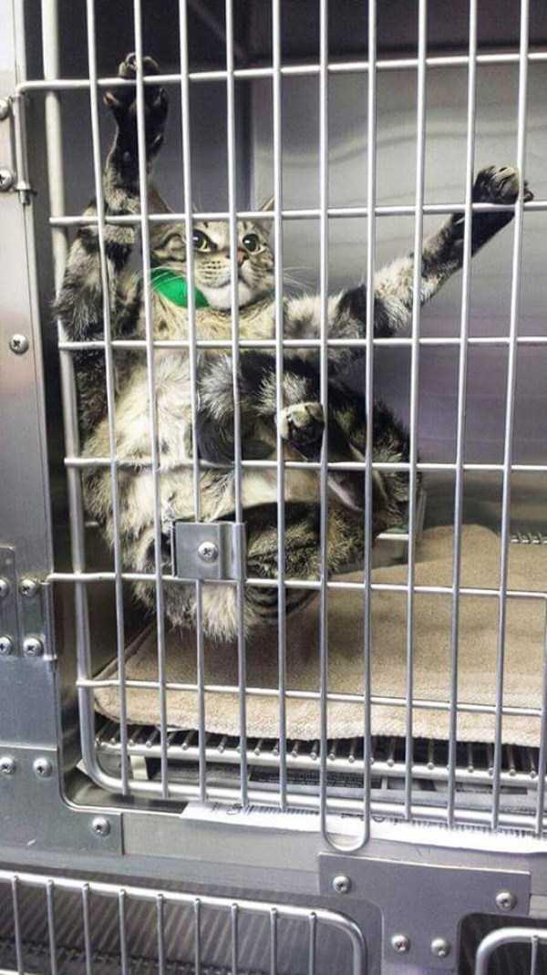 cats-at-vet (10)