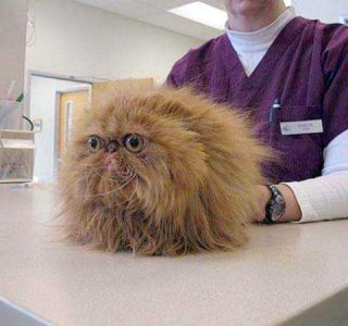 Funny Photos of Cats Scared at the Vet (18 photos)