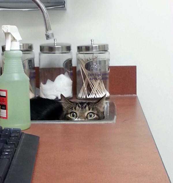 cats-at-vet (16)