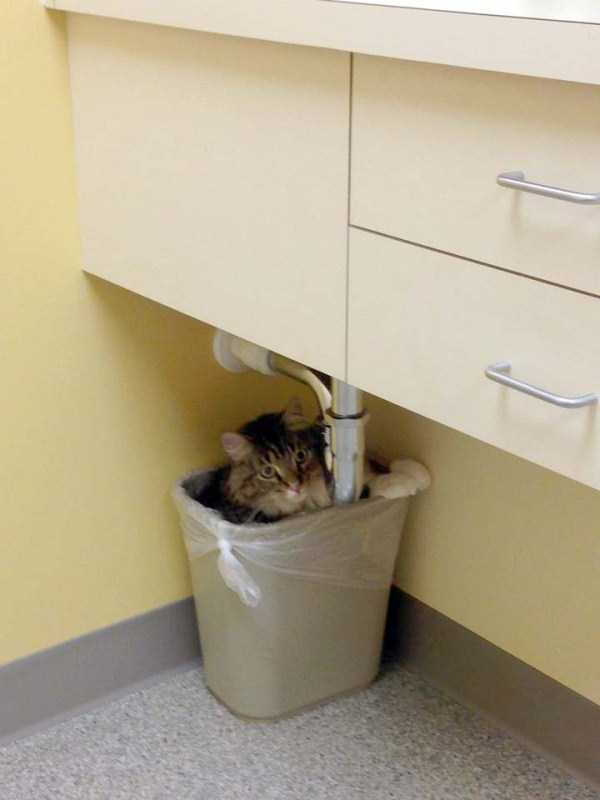 cats-at-vet (2)
