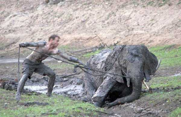 elephant-rescued-from-mud-pit (10)