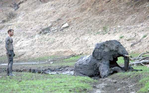 elephant-rescued-from-mud-pit (13)