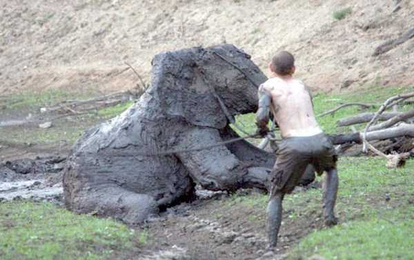 elephant-rescued-from-mud-pit (15)