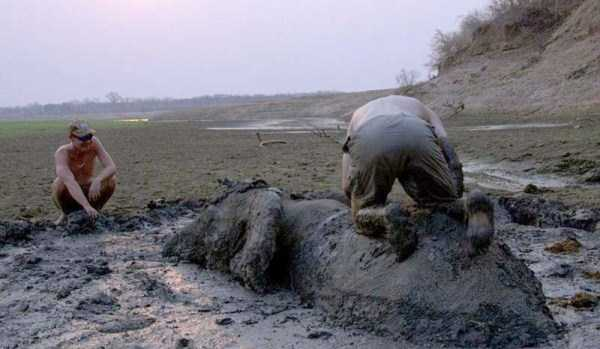 elephant-rescued-from-mud-pit (8)
