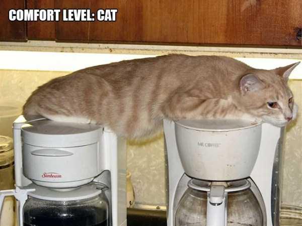 funny-cat-logic (1)