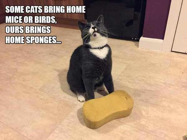 funny-cat-logic (10)