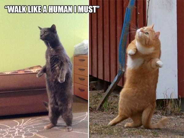 funny-cat-logic (12)