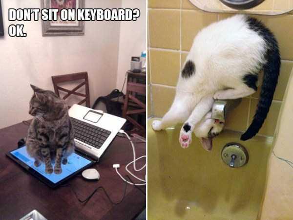 funny-cat-logic (13)