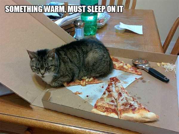 funny-cat-logic (16)