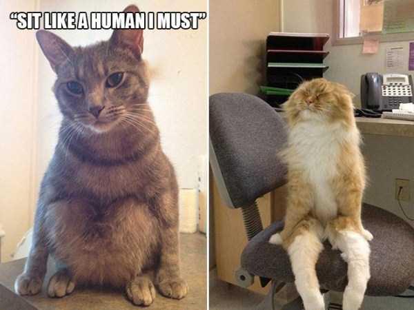 funny-cat-logic (17)