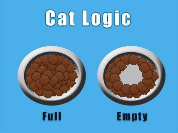 funny-cat-logic (19)