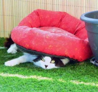 Silly Cat Logic (25 photos)