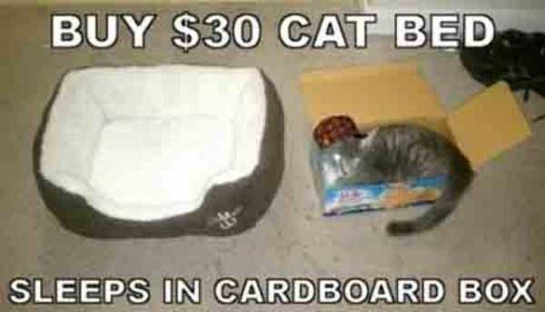 funny-cat-logic (20)