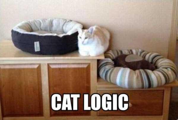 funny-cat-logic (22)