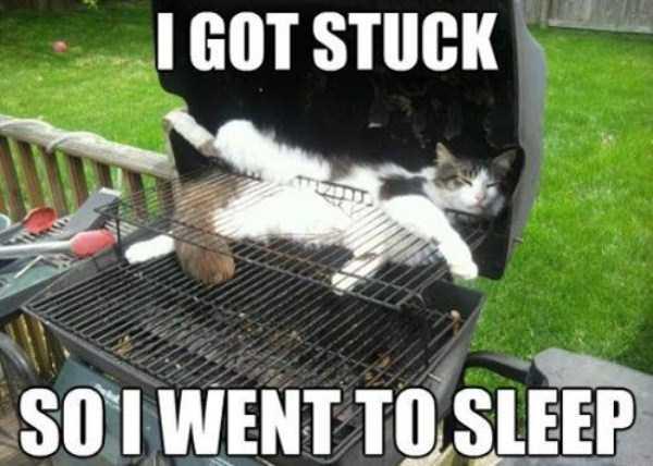 funny-cat-logic (24)