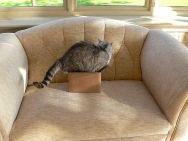 funny-cat-logic (25)